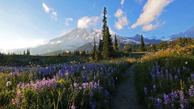 Mount Rainier - 2