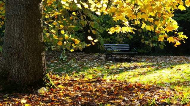 Fall Foliage in Arboretum-2