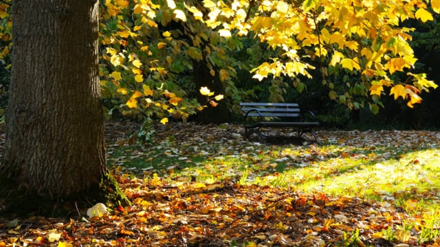 Fall Foliage in Arboretum, WA