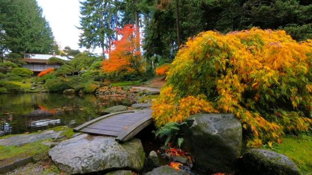 Japanese Garden. Fall