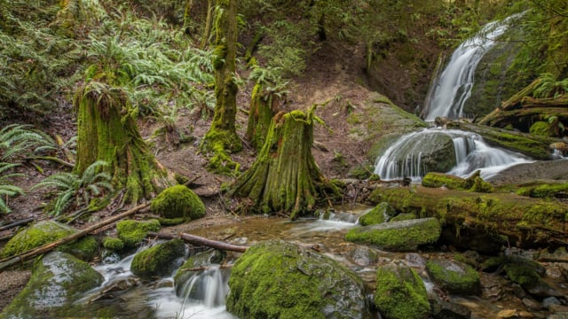 Water & Forest - 3