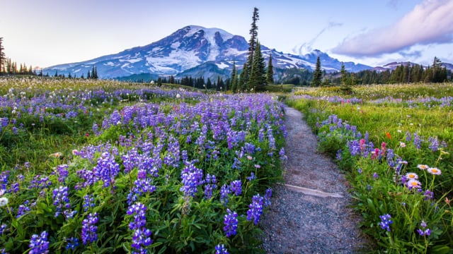 Mount Rainier NP 1
