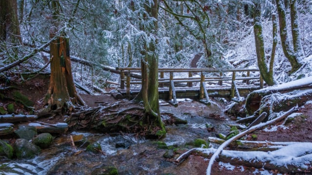 Water & Forest-5. Winter