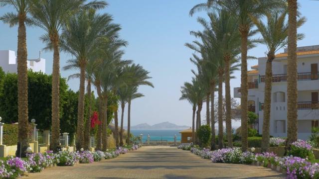 Under The Palms. Egypt