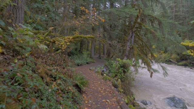 Autumn Trail Walk