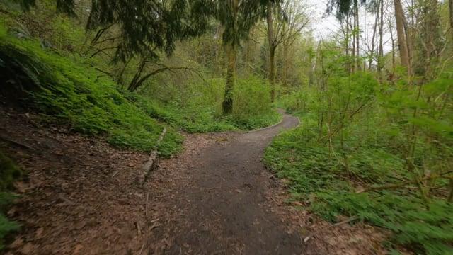 Walking in the Woods 2