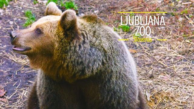 Ljubljana Zoo, Slovenia