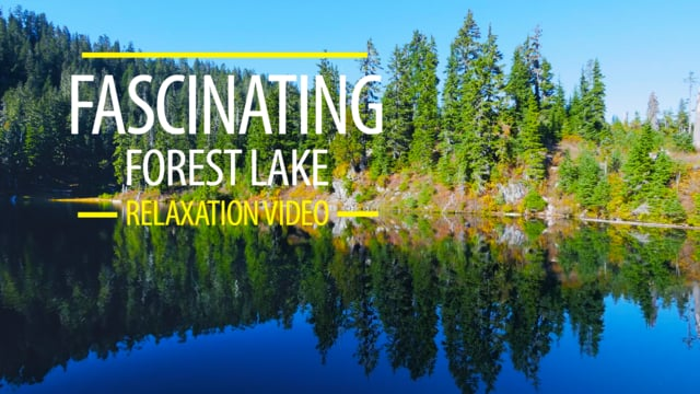 Fascinating Forest Lake
