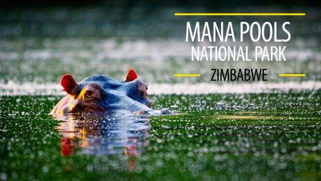 Mana Pools National Park, Zimbabwe, Africa