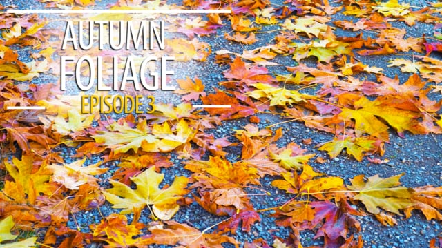 Autumn Foliage - 3