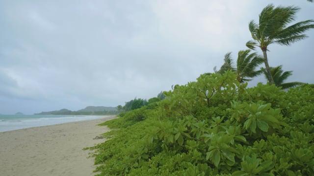 Oahu Beach - 1