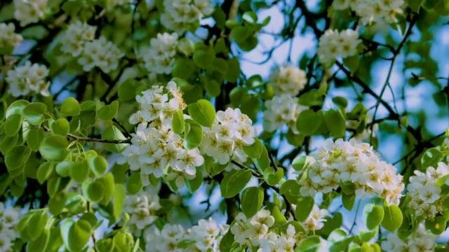 Flowers & Leaves 3