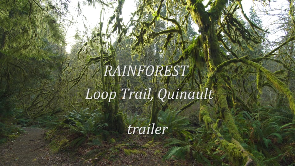 Quinault Rainforest Loop Trail