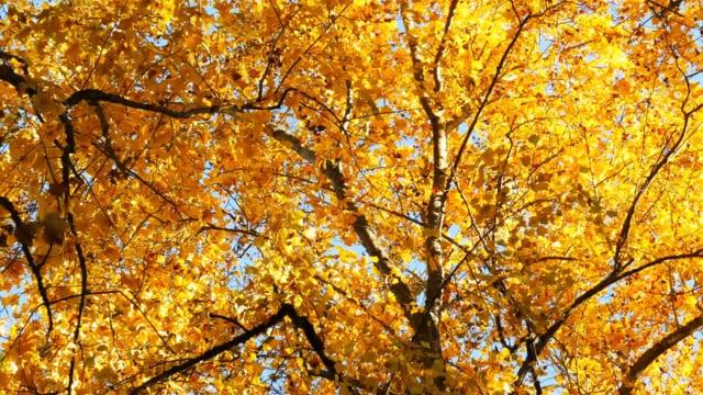 Autumn Arboretum