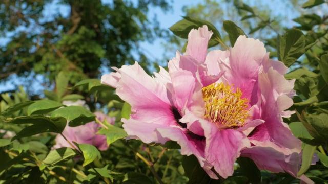 Summer Flowers Bouquet
