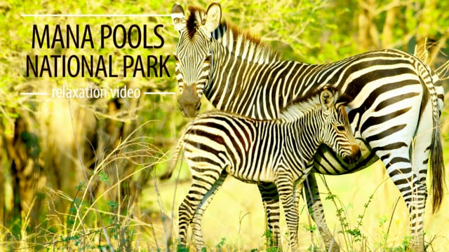 Mana Pools NP, Africa