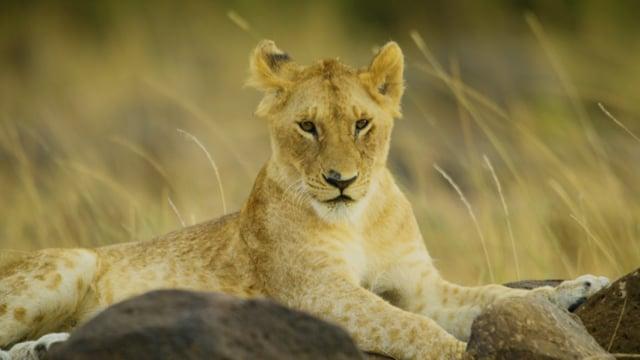 Maasai Mara National Park, Kenia