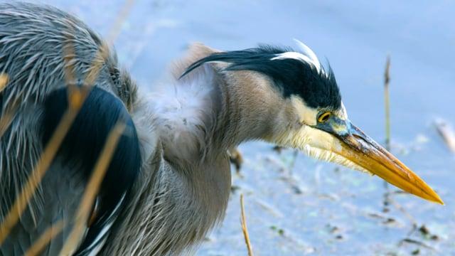 Nisqually National Wildlife Refuge, WA