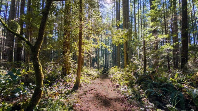 Traditional Loop Hike, Snoqualmie Region in WA