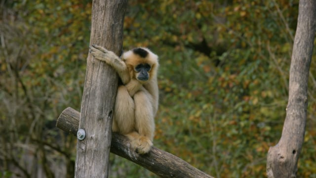 Zoo Ljubliana