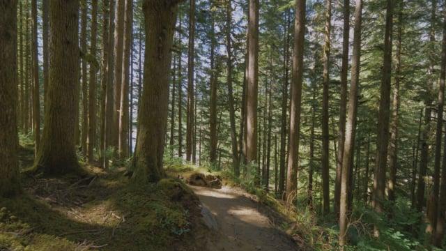 Middle Fork Trail, Snoqualmie Region, WA