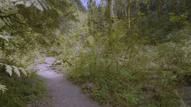 Upper Coal Creek Trail - 4K Virtual Hike