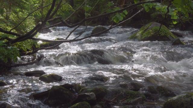 Carpahians Water. Ukraine
